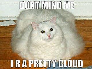 lolcat-funny-cat.jpg