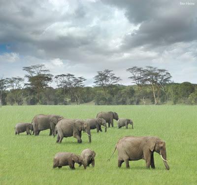 Incredible Photos Of Wild Africa