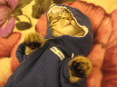 Cute Kittens In Hoodies Seen On www.coolpicturegallery.us