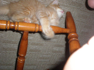 Evil cat attacks chair