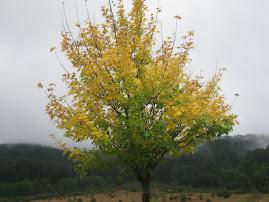 L'autunno avanza