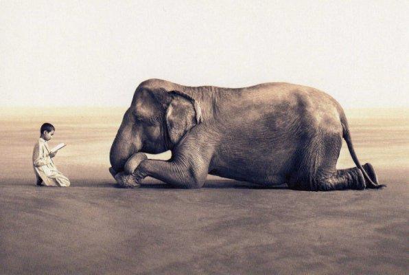 tatuaje la maravilla. La historia del niño, y el elefante es la maravilla de ser amado por unos de