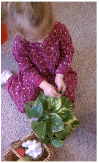Cuidar plantas - Montessori