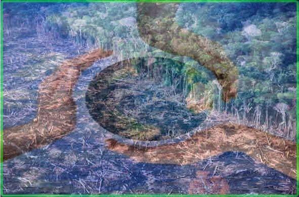 Green World O Meio Ambiente Em Meio A Nós
