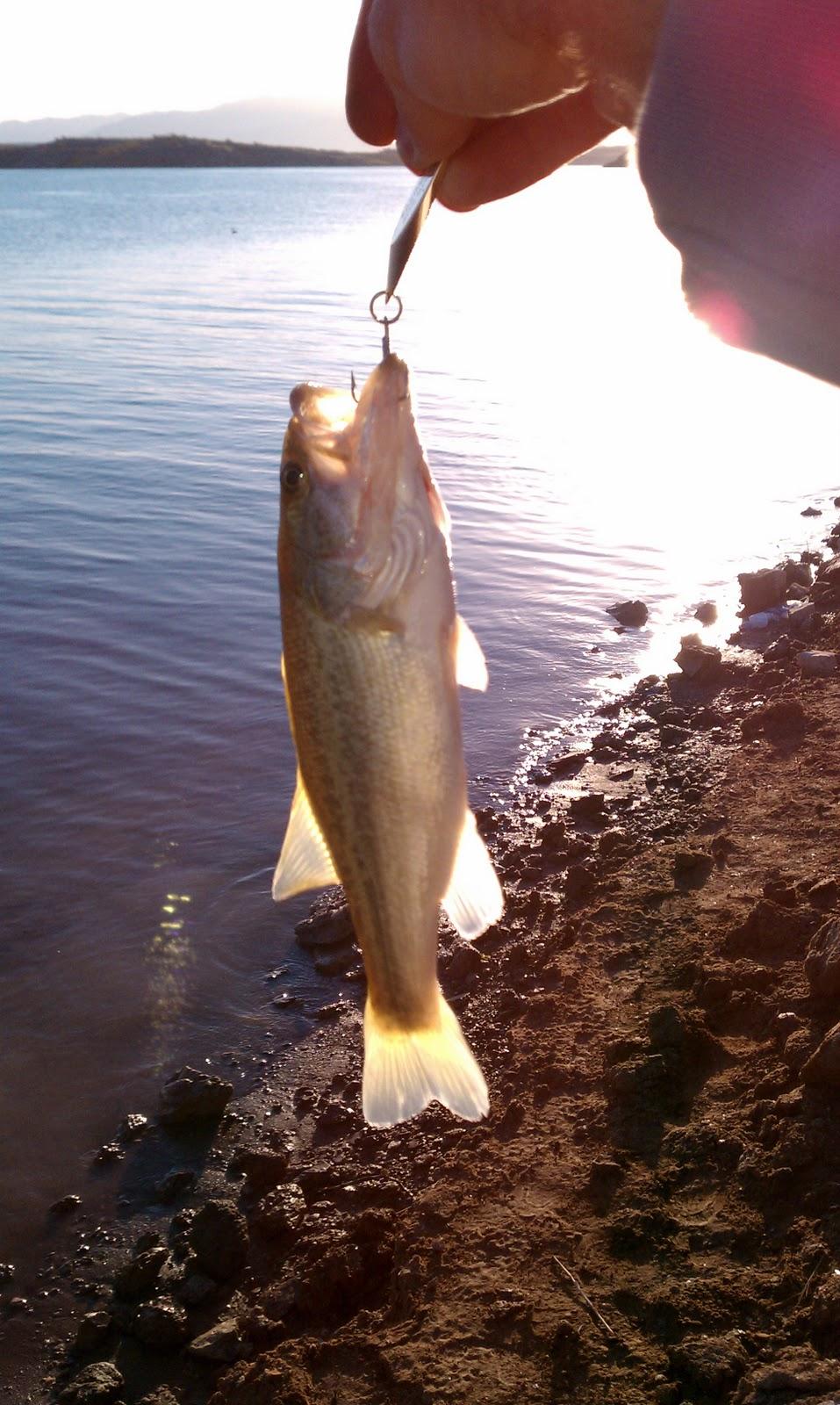 Fishing Report Lake Mead Fishing