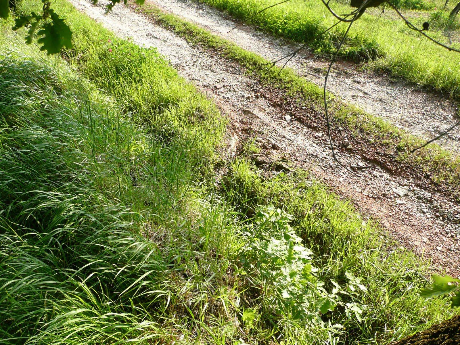 Ecomondo manutenzione delle strade di campagna argini e for Consolidare un terreno