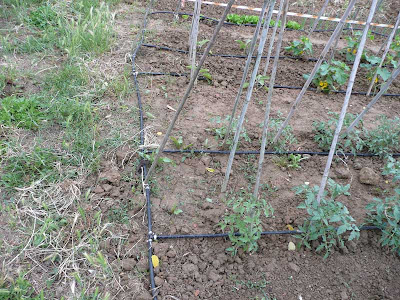 irrigazione goccia-goccia