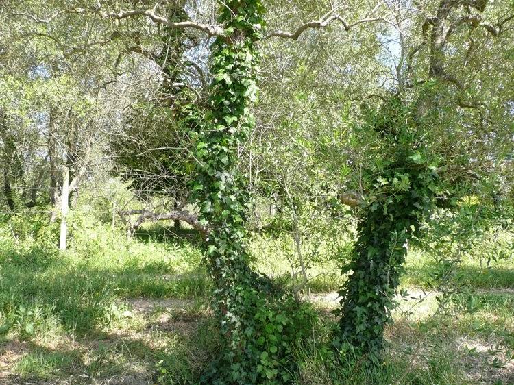 Ecomondo lotta alle piante infestanti - Lotta alle talpe in giardino ...