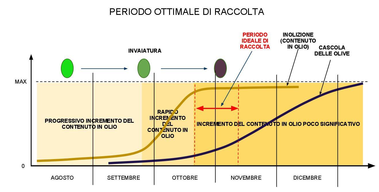 Ecomondo quando raccogliere le olive for Raccolta olive periodo