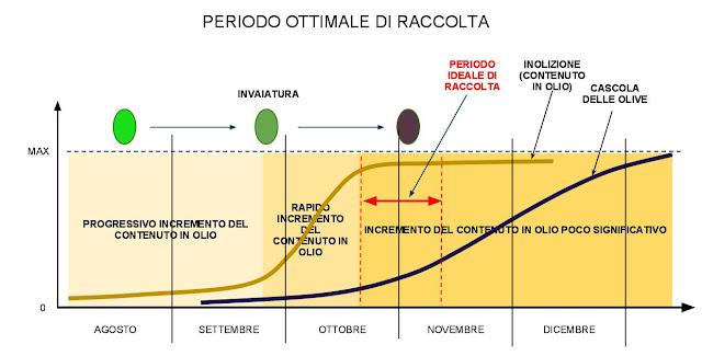 periodo ideale raccolta olive