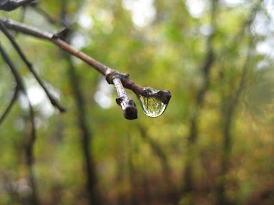 Roland Lee macro photo of rain drop at Zion