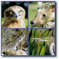 Centros de Rehabilitacion para animales silvestres