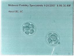 IVF 1 1/24/2007