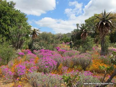karoo desert botanical garden - Desert Botanical Garden