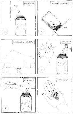 Como germinar grãos e sementes