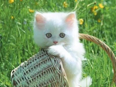 wallpaper kucing comel. comel kan:)