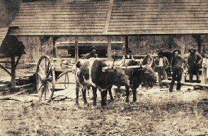 Penninger's Sawmill