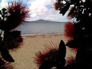 st heliers bay rangitoto island pohutokawa