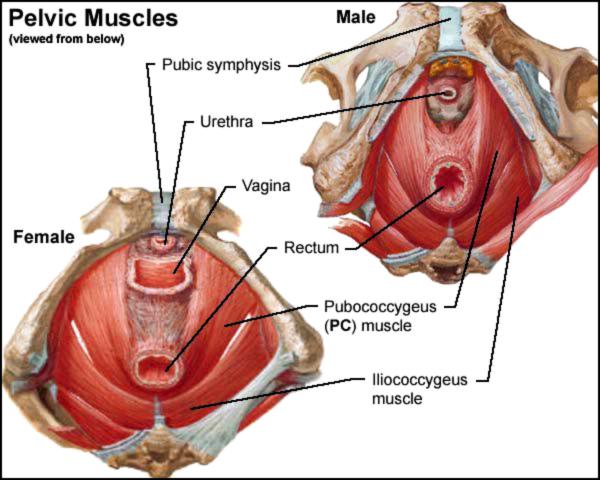 erotika-na-rentgenovskih-snimkah