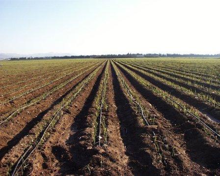 Recursos naturales biodiversidad y ambiente recursos for Recurso clausula suelo
