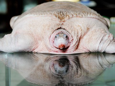 Δείτε:τα πιο παράξενα ζώα στον κόσμο!!