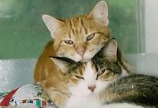 Freddy & Callie