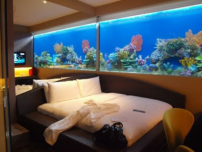 17 bedroom fish tank