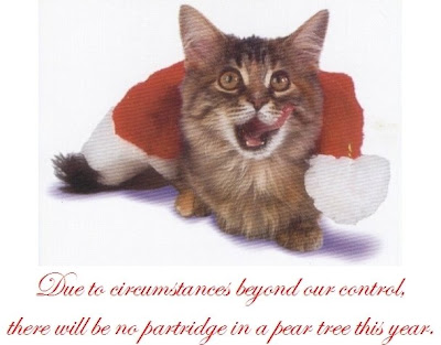 Christmas Cat Picture Background