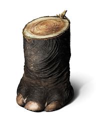 En contra de la tala de bosques y selvas