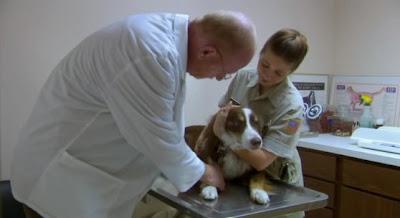 скриншот фильма Провинция. Бездомная собака.