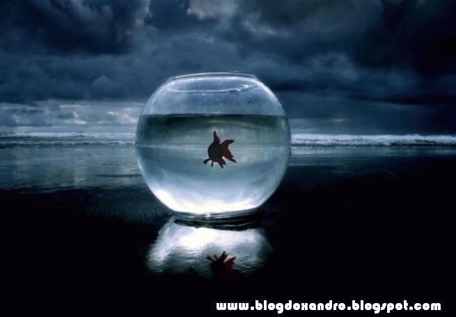 http://1.bp.blogspot.com/_X643PcxIPVk/S_Q_tSrpNbI/AAAAAAAAnmo/Rk6fyd2jd3U/s1600/perto-e-longe.jpg