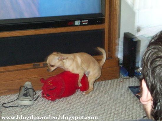 [cachorro-com-problema-de-visao.jpg]