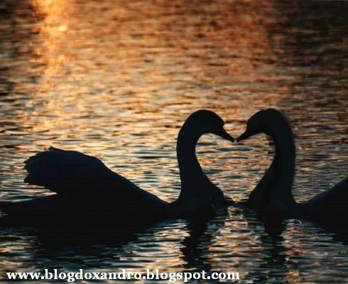 [casal-do-amor.jpg]