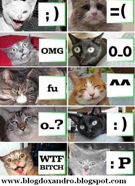 [gatos-emoticons.jpg]