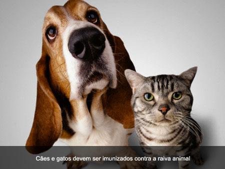 [cão+e+gato.jpg]