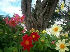 Flores de Garanhuns