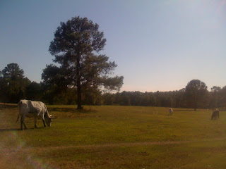 beautimous day at bluff creek ranch