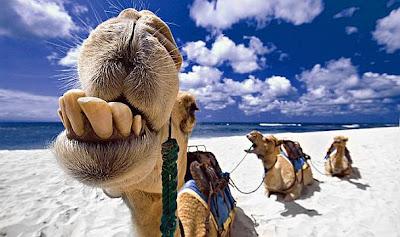 mulher a preço de camelo quanto vale uma mulher no oriente