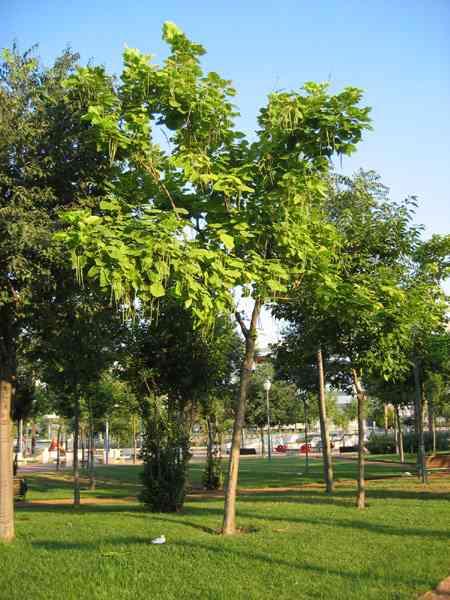 Dia de la tierra for Arboles para jardin