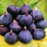 Fig fruit photo