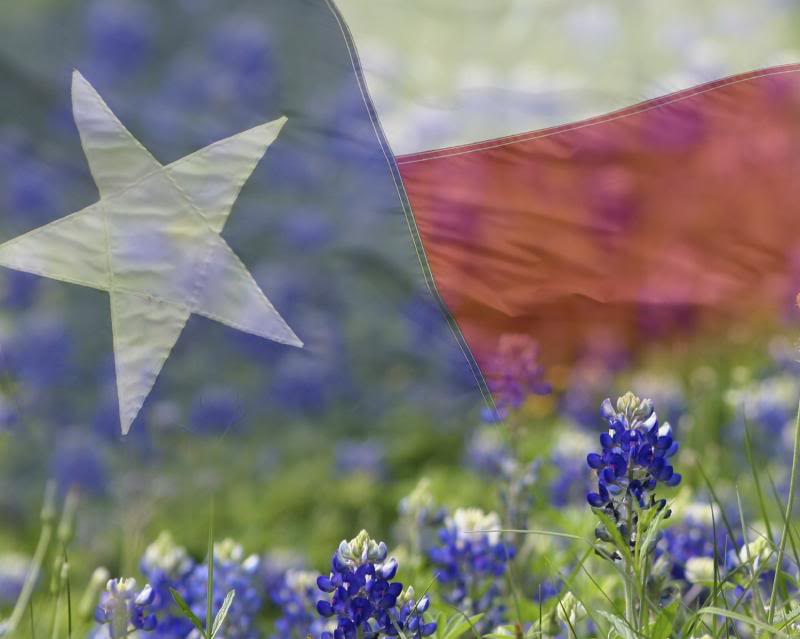 bluebonnet clip art. I went to THREE different High