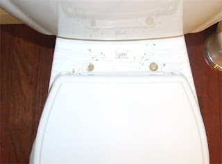 picture of Toto SoftClose Toilet Seat