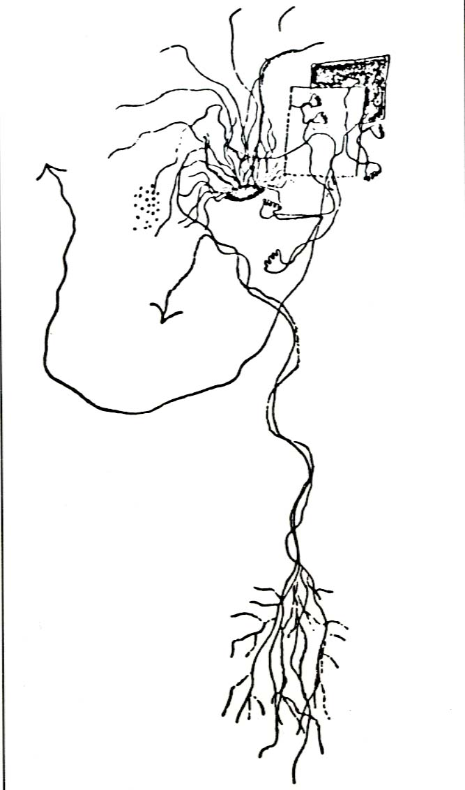 barbarous nights lorca s drawings 2001 Grand AM Wiring Diagram