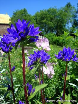 summer mystery flower