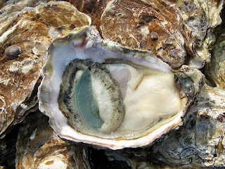 open oyster