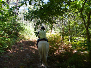 Riding in the Contis forest