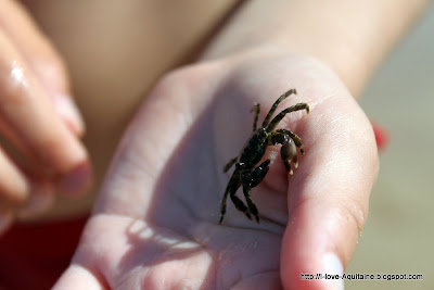 A crab in my hand