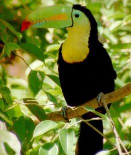 fotos de animales extinguidos - Los 10 animales prehistóricos más extraños Animales y