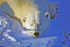 El blogg dels óssos