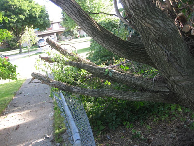 how to remove a fallen tree off a fence, break fenceremove